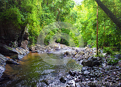 Creek in tropical forest