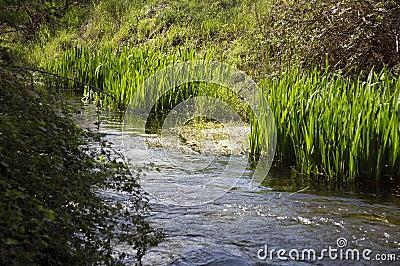 Creek water green grass