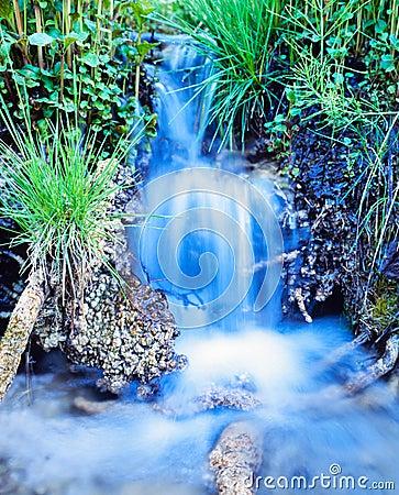 Creek waterfall rushing green meadow grass plants