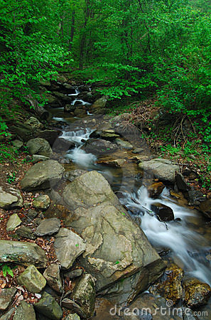 Creeks below Amicalola fall