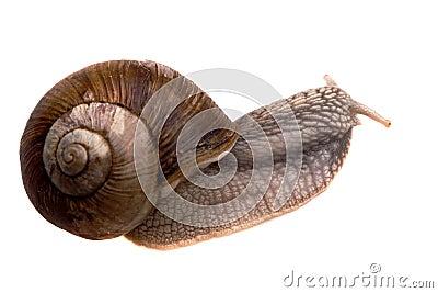 Creeping snail