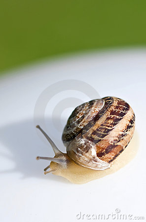 Creeping snail on a white-green background