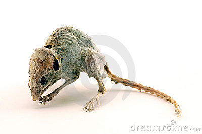 A creepy dead mouse 2