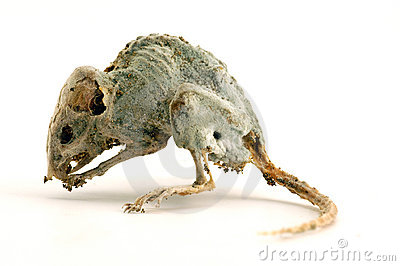 A creepy dead mouse 3