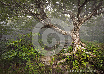 Creepy Fairytale Tree Spooky Forest Fog NC Fantasy