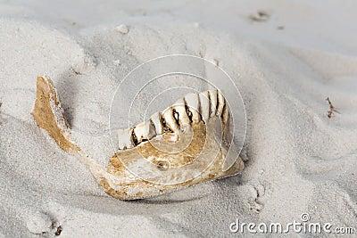 Creepy skull in the sand