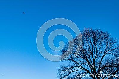 Twilight winter skies with a half moon Stock Photo