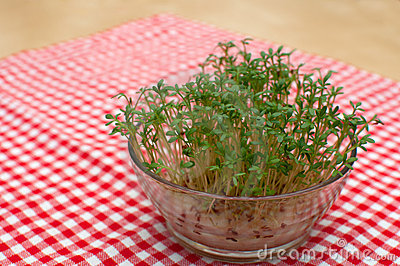Cress Stock Photography - Image: 19259672