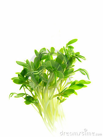 Free Cress Stock Photos - 3485783
