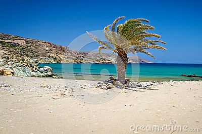 Cretan Date palm tree on Vai Beach
