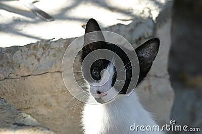 Crete / Baby cat begging for food