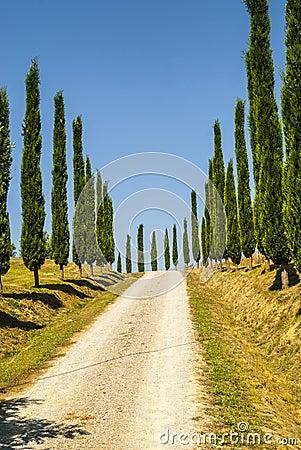 Crete senesi, characteristic landscape in Val d Orcia