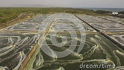 Criação de camarão na indonésia video estoque