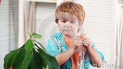 Criança e planta Abacate Agrônomo, agricultura Sujo do bebê do solo que molha a planta interna Biólogo Botany filme