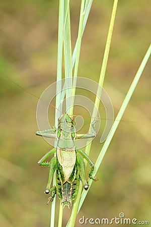 Free Cricket Stock Photography - 43498032