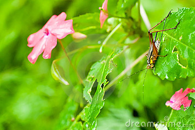 Cricket on the bush