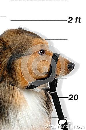 Free Criminal Dog Royalty Free Stock Image - 759886