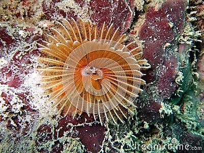 Crinoid underwater