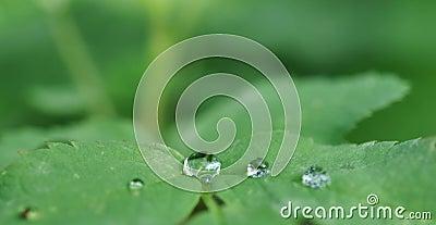 Cristal clear drops