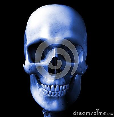 Cráneo 7
