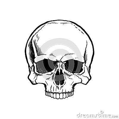Cráneo humano blanco y negro