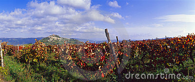 Croatia - Vineyards at Motovun