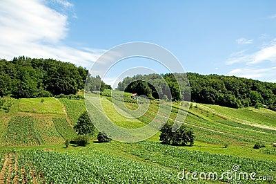 Croatian Farm 1