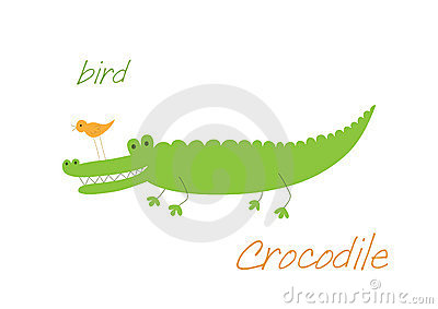 Crocodile and bird