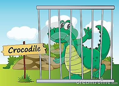Crocodile in cage