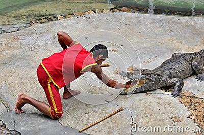 Crocodile Performance Editorial Photo