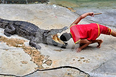 Crocodile Performance Editorial Stock Image