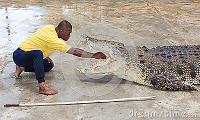 Crocodile Editorial Photography