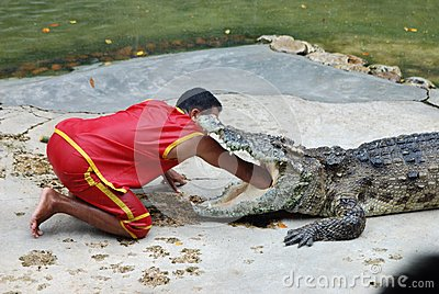 Crocodile show Editorial Photo