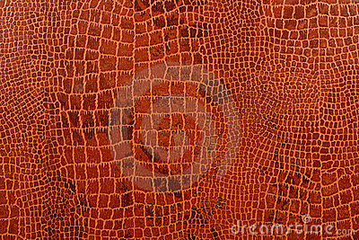 Crocodile Skin Background with Pattern Texture
