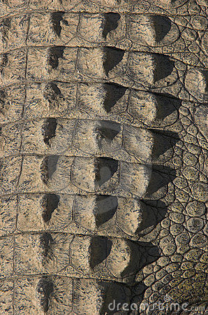 Free Crocodile Tail Skin Royalty Free Stock Photo - 774455