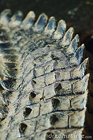 Crocodile tale #2