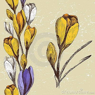 Crocus flower and seamless floral border