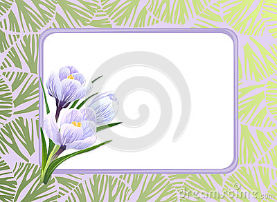 Crocuses and frame