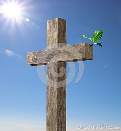 Croix en bois avec une branche verte photo stock image for Achat branche bois