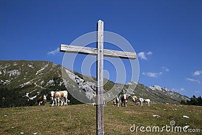 Croix et vaches en bois sur la montagne