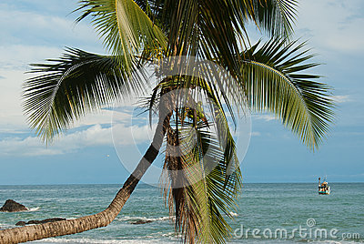 Crooked Palm tree Ocean Scene