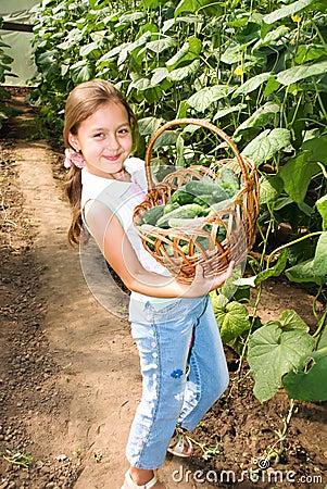 Crop of cucumbers