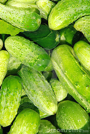 Crop of cucumbers