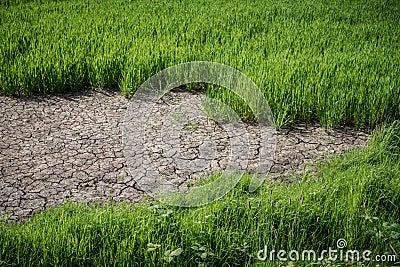 Crop Drought