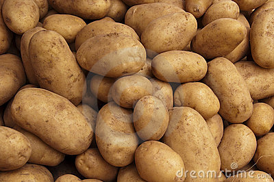 Crop of Farm Potatoes