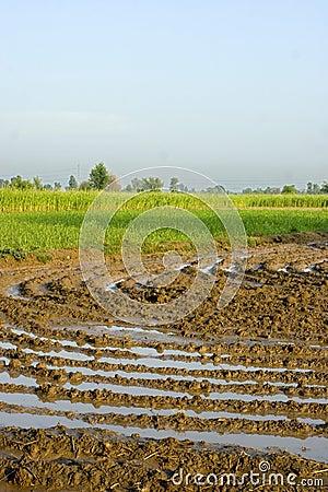 Free Crop Fields Royalty Free Stock Photo - 4011685