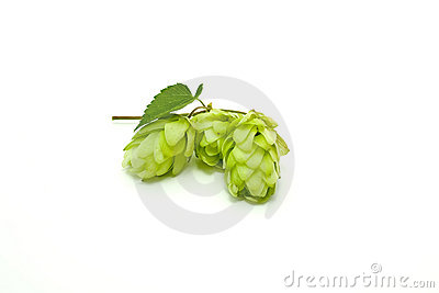 Crop of hop