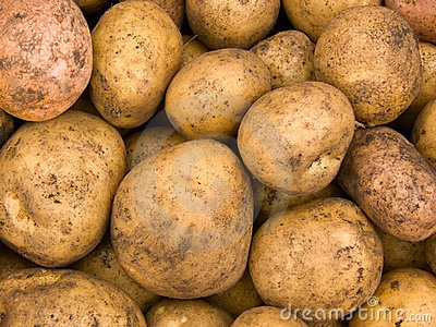 Crop of tubers of a potato