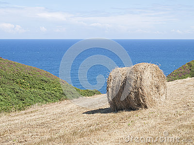 Cropland with hay bale