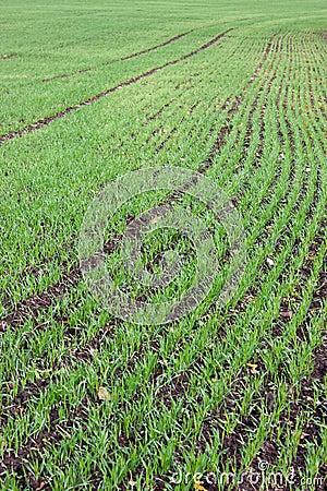 Crops